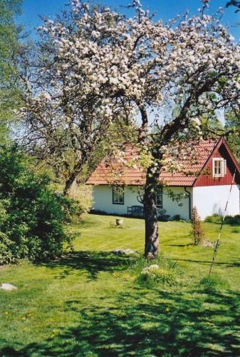 Außenansicht - Ferienhaus Björkadal
