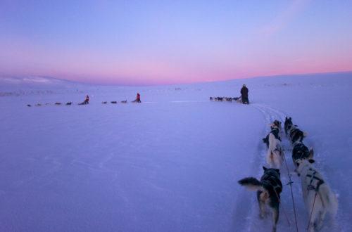 Ein besonders Erlebnis, das Sie nicht so schnell vergessen werden -ein Fahrt mit dem Hundeschlitten | © Staffan Widstrand/imagebank.sweden.se